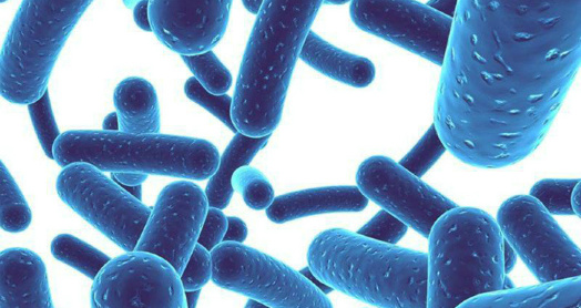 Бифидобактерии в закваске живой баланс