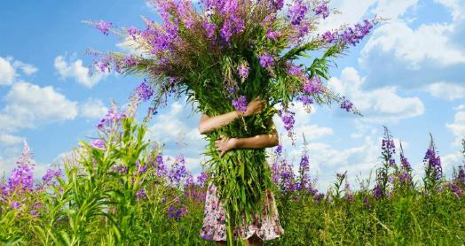 охапка иван-чая живой баланс в руках у девочки на поле иван-чая