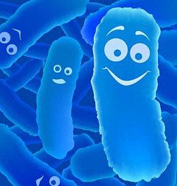 бифидобактерии в кисломолочной закваске живой баланс